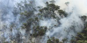 'Fire Begets More Fires': Rainforests Slip Into Cycle of Destruction