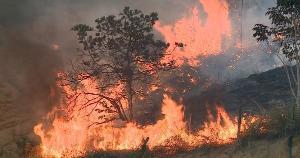 Os funcionários das creches contaram que o fogo começou na parte alta do bairro Santo Antônio, por volta das 15 horas