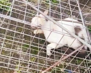 O animal foi resgatado depois de ter sofrido maus-tratos e estava sendo cuidado por uma protetora de animais. Ele fugiu da casinha durante a madrugada desta quarta(2)