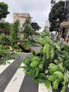De acordo com moradores, não ventava no momento da queda – às 7h20 desta quarta-feira (22) – e ninguém ficou ferido. Os serviços de limpeza foram concluídos às 9h30 e o trânsito já está liberado na via