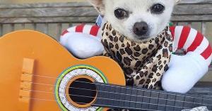 Conheça o dia a dia de uma turminha de sete cachorros que viraram 'Dog Models' e divertem os seguidores nas redes sociais com fotos e vídeos divertidos