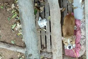 A cadela, que deu cria há cerca de dois meses, foi retirada da residência com apoio de uma veterinária voluntária e da Polícia Civil