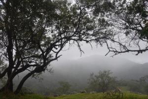 O mês deve ser chuvoso também para áreas como leste de São Paulo, o Rio de Janeiro e a Zona da Mata mineira. A Capital Vitória deve terminar o mês de março com mais chuva do que a média climatológica