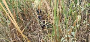 O caso de estupro ocorreu na última sexta-feira (14). A prisão foi realizada na manhã deste domingo (16) em uma área de mato no distrito de Córrego do Beirado, no interior da cidade capixaba