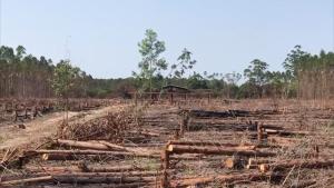 Promessa é de terrenos grandes e terras férteis, mas áreas são privadas, fruto de invasões. A Polícia Civil investiga a ação de associações criminosas na região