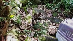 A gatinha foi encontrada sozinha, na região do Caxixe, em Venda Nova do Imigrante. Machucada e com queimaduras, ela recebeu tratamento até ser colocada de volta na natureza