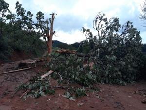 Uma moradora da região afirmou que a queda da árvore chegou a interromper uma estrada de chão na região de Chapéu, zona rural do município