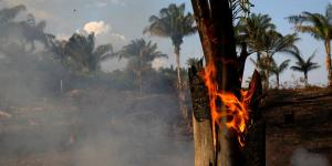 Fires Destroy Amazon Rain Forest, Blanketing Brazilian Cities in Smog