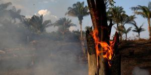 Fires Destroy Amazon Rain Forest, Blanketing Brazilian Cities in Smog