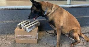 Uma pequena caixa de papelão com 2,7 quilos do entorpecente estava entre as bagagens para não levantar nenhuma suspeita; o material foi farejado pela cadela Kira