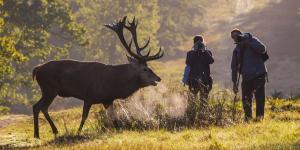 Annual Deer Mating Ritual Attracts Third Creature—Human Selfie Seeker