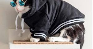 São produtos diferenciados que atendem não só os felinos, mas também vão deixar sua casa mais estilosa