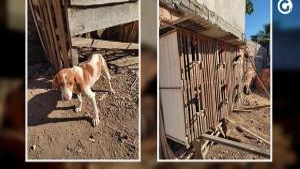 Cão estava acorrentado, sem água e sem comida, enquanto as aves eram usadas em rinhas; suspeito de 53 anos foi detido nesta terça-feira (27)
