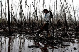 Aterros, lixo, esgoto e cata de crustáceos irregular causam graves consequências ambientais, sociais e econômicas para o manguezal do Espírito Santo
