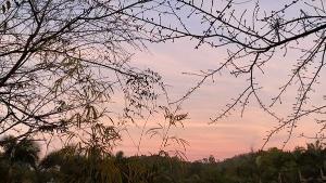 'Foi por volta de 5h50, quase 6h quando vi o termômetro marcando 0 °C. A vegetação ficou até coberta pela geada', contou o produtor Vagner Uliana, morador da região