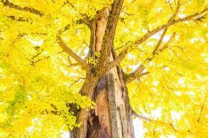 Como as árvores, nós também podemos ser resistentes contra as forças irreprimíveis da natureza, curar a nós mesmos e buscar nutrição mais adequada