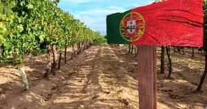 Seleção traz opções de vinho verde, do Porto, rosé e tinto: saiba por que esses rótulos não podem faltar na sua adega