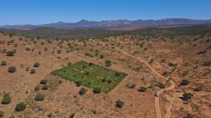 Instituída pela ONU, a Década da Restauração de Ecossistemas visa promover a restauração ecológica de espaços naturais degradados.