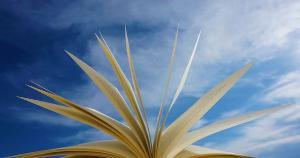 Tecnologias educacionais e de comunicação foram integradas aos serviços de referências no modelo remoto, um desafio para as bibliotecas universitárias serem obrigatoriamente híbridas ou totalmente virtuais