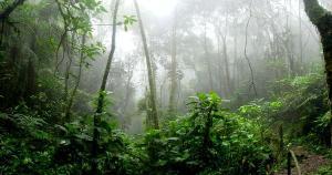 Segundo estudo, de toda a cobertura vegetal da Amazônia, 15% já foram devastados -uma área comparável ao tamanho do Chile; o Brasil é o país que lidera a destruição da floresta