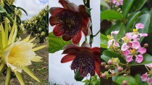 Passar pelos plantios capixabas em algumas épocas do ano pode ser uma grata surpresa. Isso porque antes mesmo dos frutos nascerem, são as flores que encantam pela beleza e diversidade