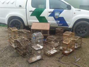 Além dos 35 pássaros – que não tinham registro junto a órgãos ambientais –, uma obra considerada poluidora foi constatada em Área de Preservação Permanente (APP)