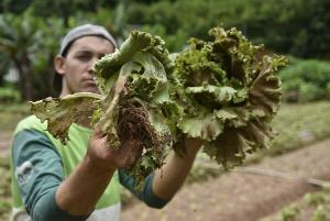 Setor agropecuário foi responsável pelo maior número de contratações. No ano, segundo dados do novo Caged, Estado abriu mais de 16,6 mil oportunidades de trabalho formal