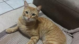 Imagens de câmera da casa da dona do gato Nenezinho registrou quando um homem que passava pela rua se agachou, pegou uma pedra e arremessou contra o animal. Crime é investigado pela CPI dos Maus-Tratos Animais e pela Polícia Civil