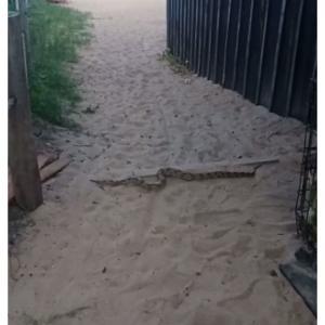 O animal foi flagrado por vendedora enquanto trabalhava em uma barraca de coco no local; biólogo destaca que, mesmo assustando pelo tamanho o animal é inofensivo