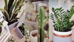 As espécies tropicais são as mais comuns e resistentes ao calor. Aposte em suculentas, cactos, zamioculcas, espada-de-são-jorge, pacová e até orquídeas