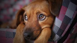 Segundo a médica veterinária Tatiana Sacchi, apesar de não ser uma doença grave na maioria dos casos, os surtos são frequentes e os animais podem passar pela infecção mais de uma vez