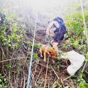 Dois escaladores profissionais foram acionados nessa segunda-feira (02) por uma moradora que soube da situação dos animais presos num paredão
